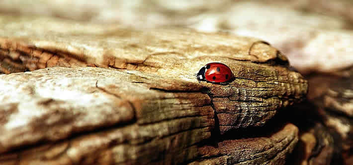 Change your luck - lady bug